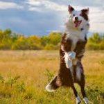 animal communication, dog communication, animal healing, dog healing