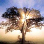 Spiritual bereavement support, bereavement support, grief, bereavement counselling