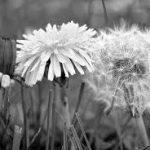 Bereavement counselling, spiritual bereavement support, bereavement, grief, bereavement support, dying, death